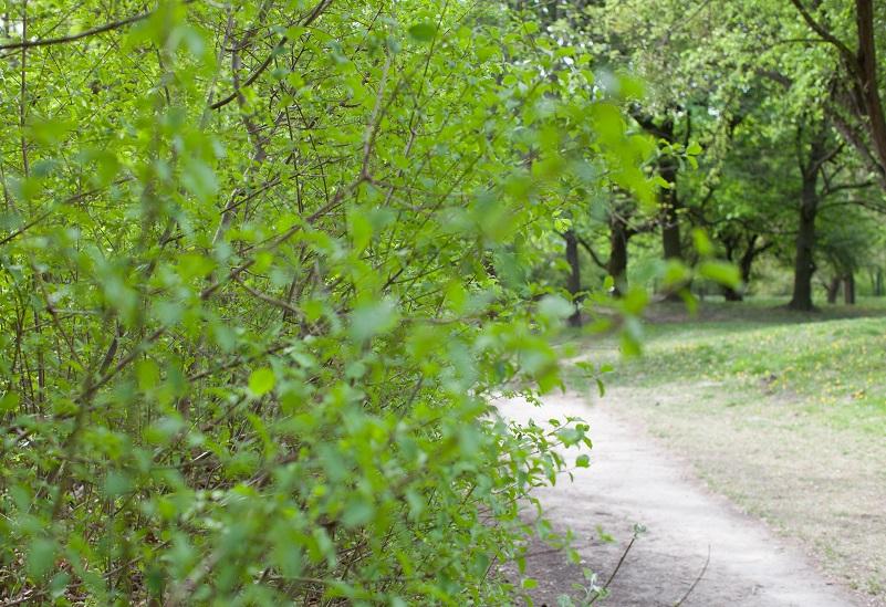 GesundheitLernen Waldweg